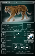 Tiger_Card_Graphic_V02