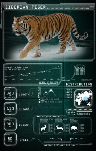 Tiger_Card_Graphic_V02